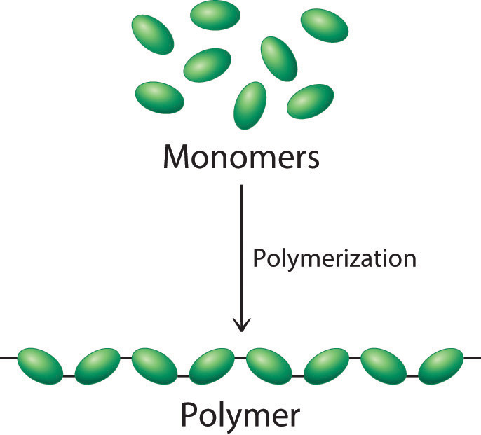 What Is The Monomer That Is Used To Build Proteins